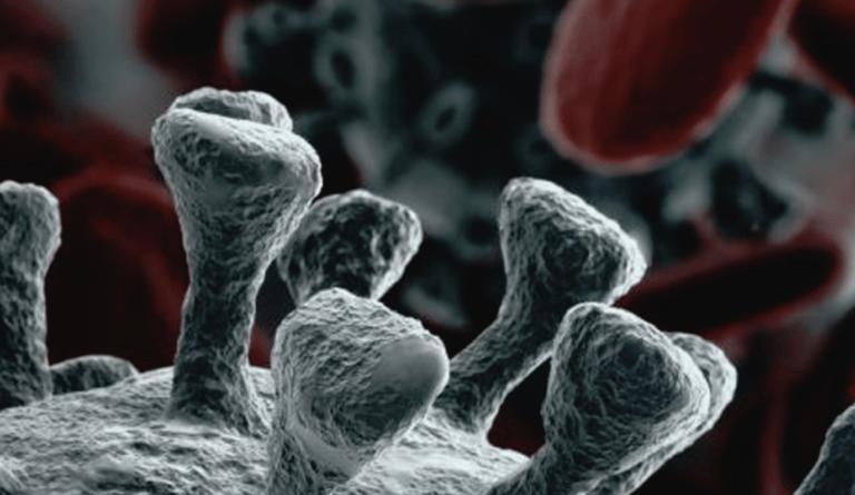Il Coronavirus a Pineto miete la seconda vittima