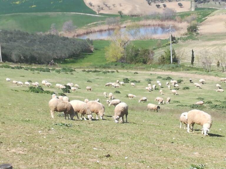 Arrosticino d'Abruzzo: la Cia chiede la certificazione IGP