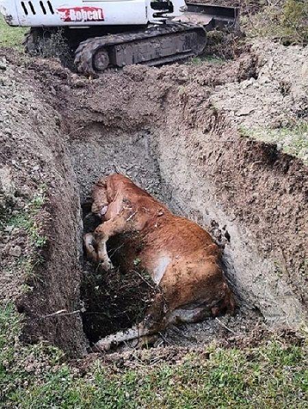 Smaltimento illecito di letame e carcasse di animali nell'area del Parco Nazionale
