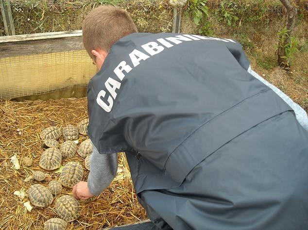 Pescara, confiscate 2 tartarughe protette detenute illegalmente