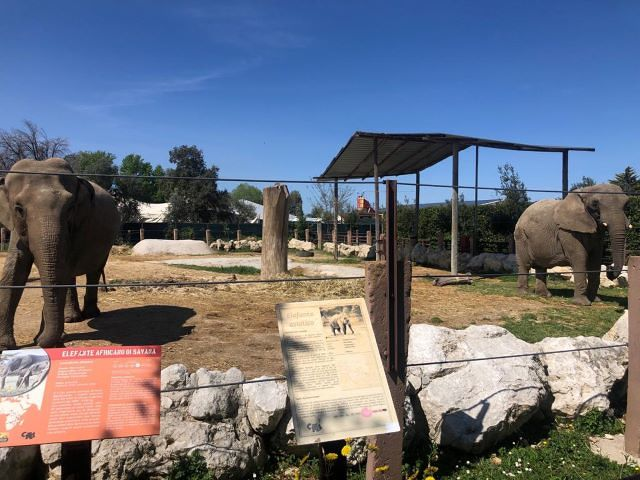 Turismo, Febbo: 'Ingresso gratuito allo Zoo D'Abruzzo per gli operatori sanitari e volontari della Protezione civile'