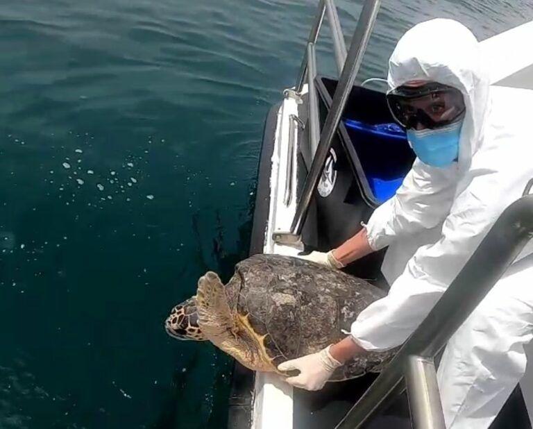 Pescara, 4 giovani tartarughe curate e rilasciate in mare
