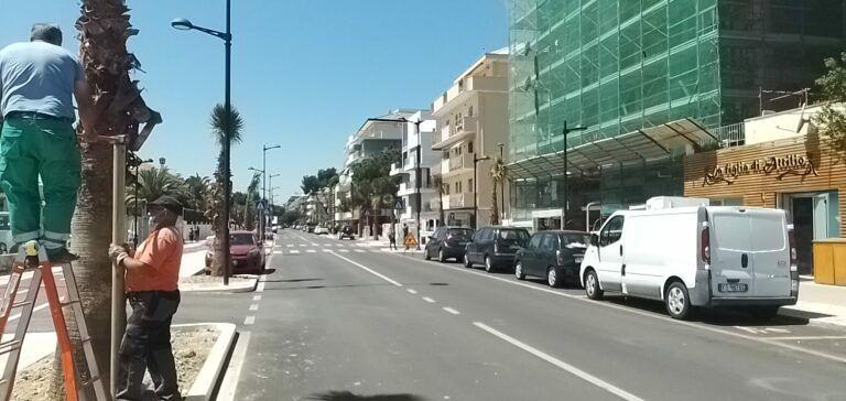 "Pescara, palme in via Pepe: ""Scelte insensate costate 60mila euro"""