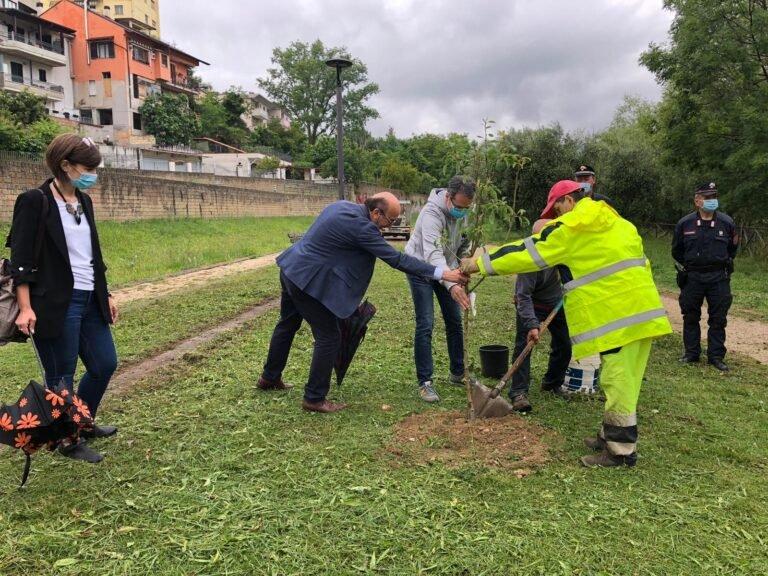 Teramo, Giornata mondiale per l'ambiente: due alberi di pero al parco fluviale FOTO