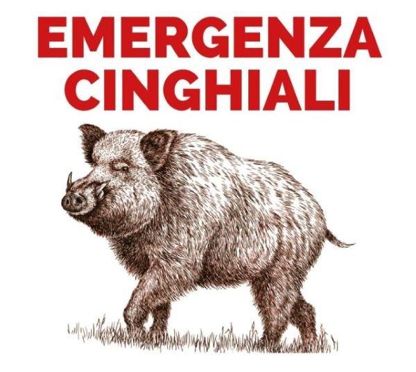 Vasto, emergenza cinghiali: interventi su alcune aree agricole vicine alle arterie stradali