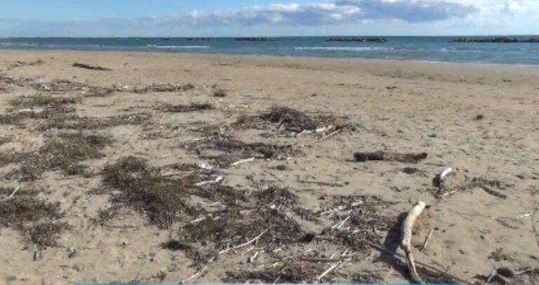 Cologna, spiaggia libera lasciata in abbandono. Ritardi nei lavori di pulizia NOSTRO SERVIZIO