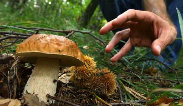Intossicazione da funghi: tre interventi dell'Arta in Abruzzo negli ultimi giorni