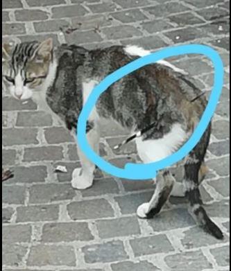 """Atri, il caso del gatto """"infilzato"""" FOTO"""