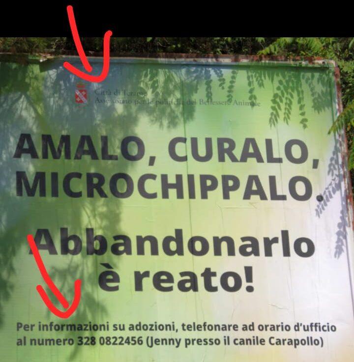 Teramo: Verzilli storce il naso sulla campagna comunale contro l'abbandono dei cani