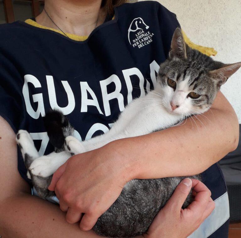 L'Aquila, gatto chiuso in un garage: salvato dalle Guardie Zoofile LNDC