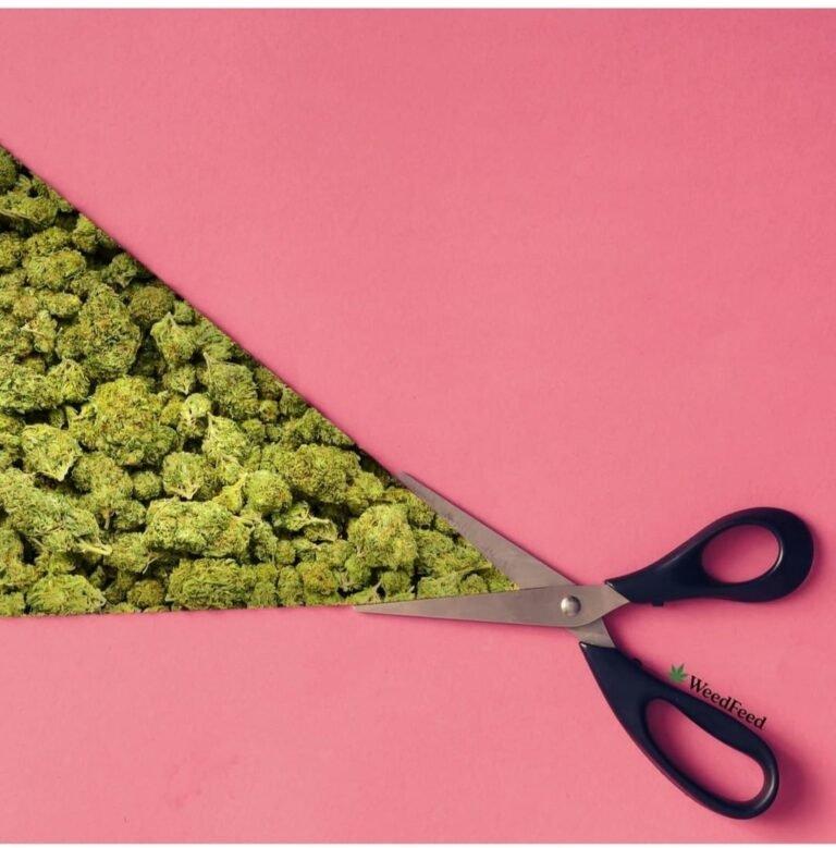 La marijuana blocca gli effetti del virus HIV