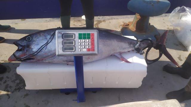 Guardia Costiera di Ortona, devoluto alla Caritas un esemplare di tonno rosso sequestrato durante l'attività di vigilanza sulla pesca