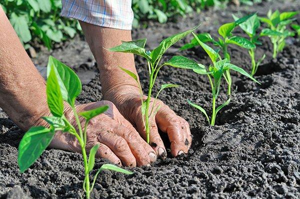 Teramo, nuovo contratto provinciale per lavoratori agricoli: previsti aumenti
