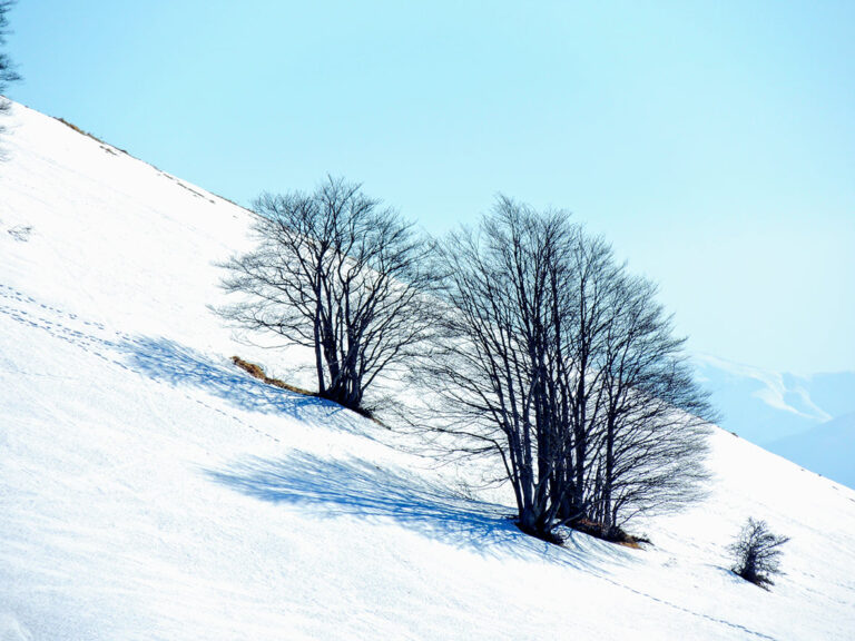 Giulianova, Conalpa dona due alberi per Piazza della Libertà. Foto 'Inverno' vince concorso