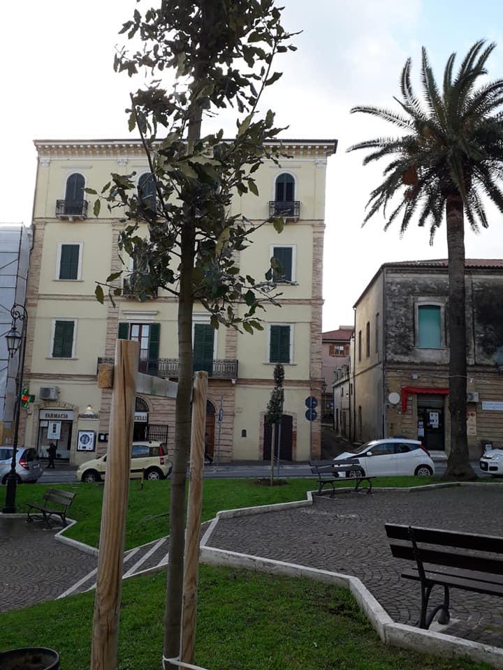 Giulianova, Giornata dell'Albero: due nuovi lecci in Piazza della Libertà grazie al Conalpa
