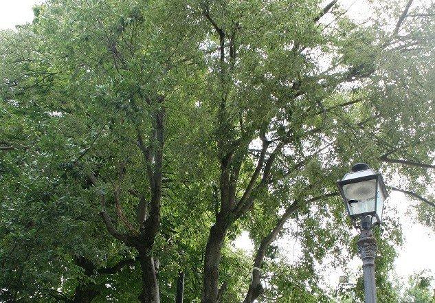 Chieti, WWF: 'Gli alberi abbattuti alla Villa Comunale per un rischio crollo che invece non esisteva'