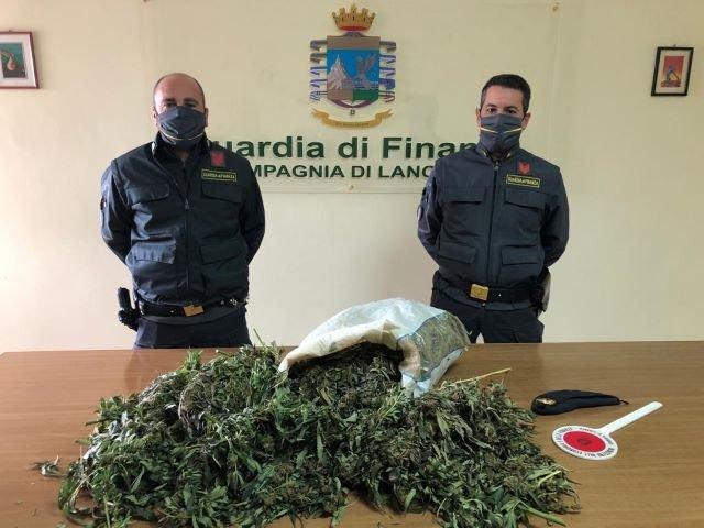 Guardia di Finanza Lanciano: sequestrati nove chili di piante di marijuana
