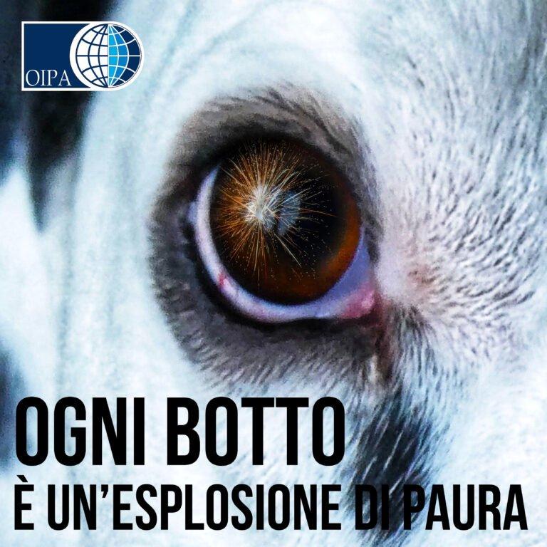 Botti di Capodanno, i consigli dell'OIPA per proteggere gli animali