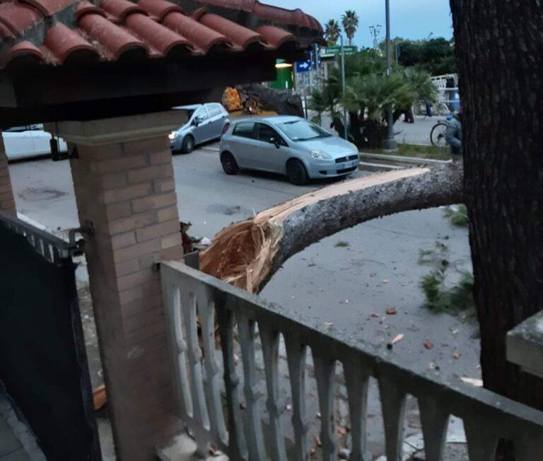 Silvi, il forte vento abbatte un grosso ramo di pino sul lungomare FOTO