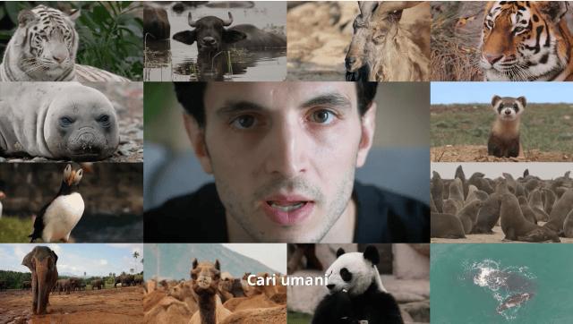 Gli animali scrivono all'uomo: 'Per salvare il Clima dovete agire ora', la campagna WWF #CariUmani