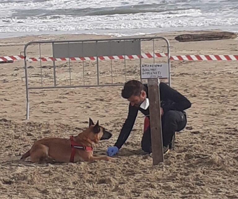 Tortoreto, polpette avvelenate in spiaggia: area setacciata dalla forestale FOTO