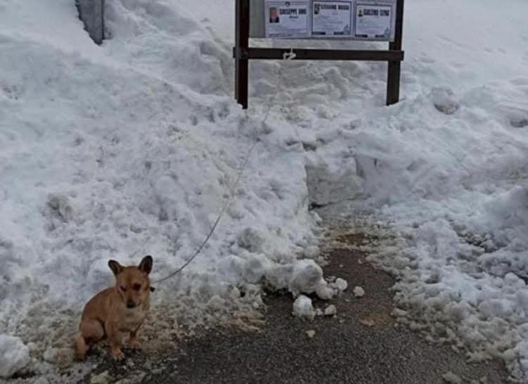 La triste storia di Balù, abbandonato nella neve