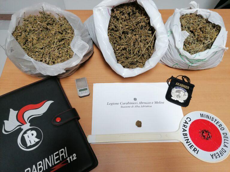 Alba Adriatica, blitz nel casolare disabitato: sequestrato 1,5 kg di marjuana FOTO