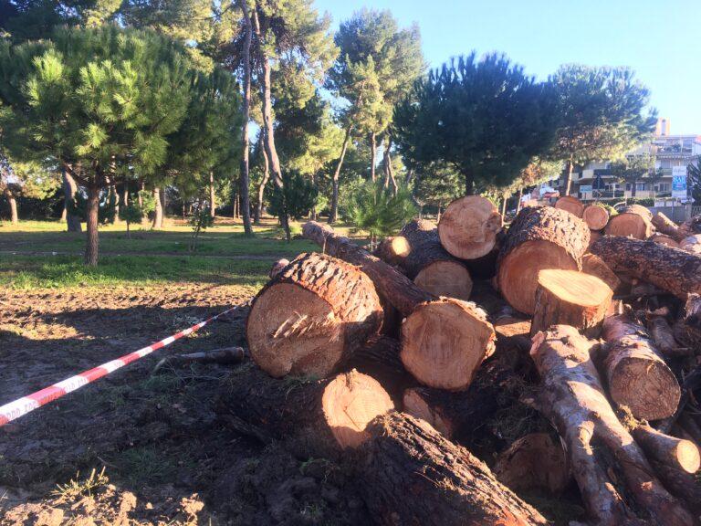 """Pescara: """"Strage di pini protetti nella riserva Santa Filomena"""""""