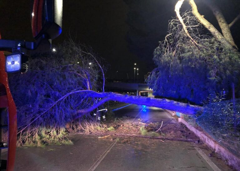 Pescara, albero cade sul lungofiume