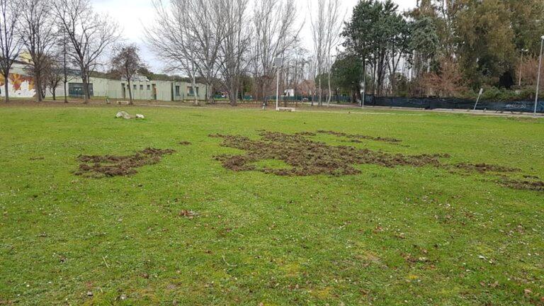 Giulianova, cinghiali a spasso nel parco Annunziata. I cittadini chiedono l'intervento di organi competenti