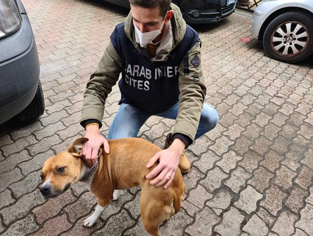 Montesilvano, confiscati 2 cani per maltrattamenti: multa da 32mila euro