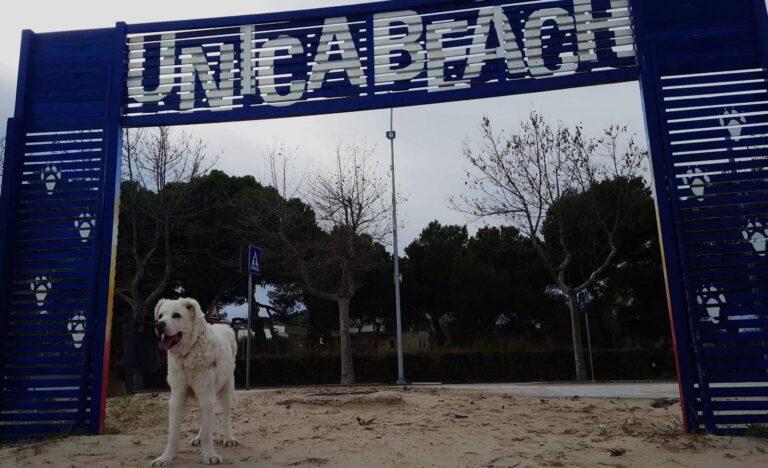 Giulianova, Unica Beach: 'Giunta Costantini inadempiente alla legge 'Rilancio Italia' a tutela del turismo'