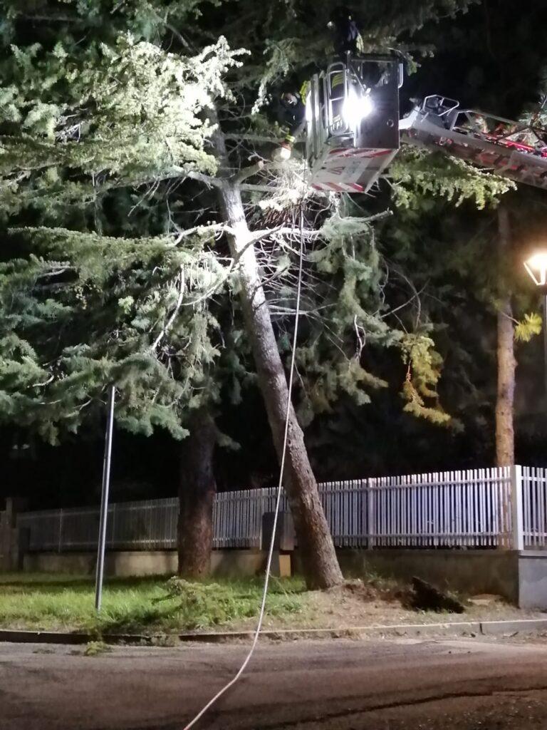 Atri, grosso pino pericolante: l'intervento dei vigili del fuoco VIDEO
