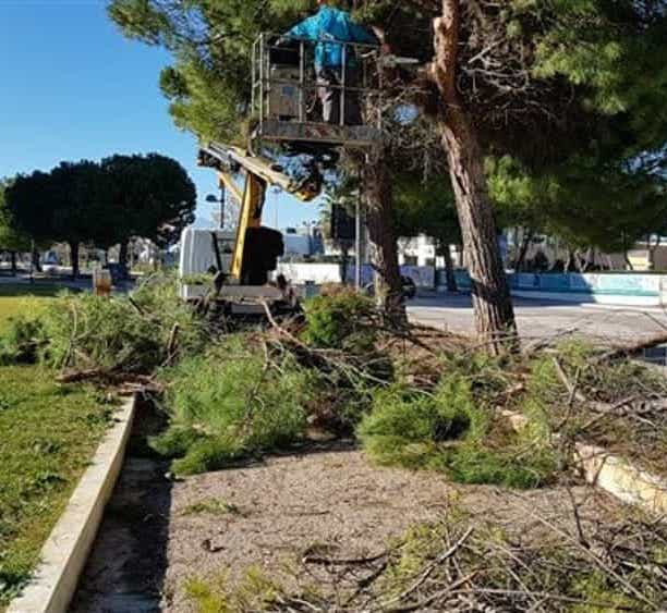 Montesilvano, parte la potatura di 2mila alberi