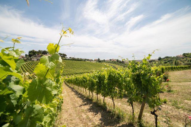 Crescono i vini abruzzesi in Italia, reggono le vendite in Germania