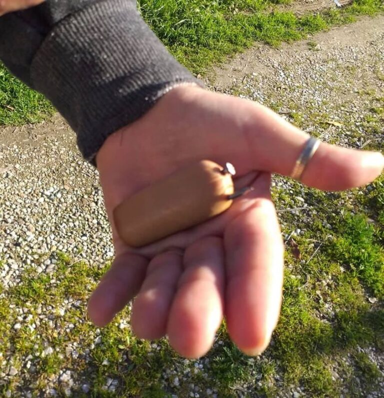 Martinsicuro, esche con chiodi abbandonate in via Calabria: la segnalazione