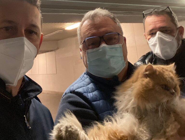 Pescara, ritrovato il gatto Grisù dopo 5 giorni: era ancora in stazione-VIDEO