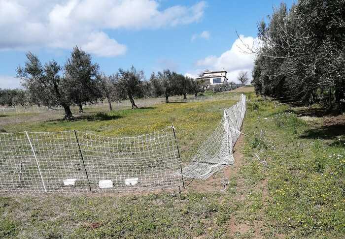 Animalisiti 'liberano' lepri dai recinti di ambientamento nelle campagne tra Roseto e Morro d'Oro FOTO