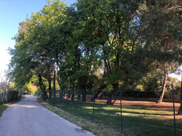 Pescara, via Pantini: frenata sul taglio degli alberi