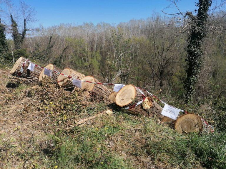 Sant'Omero, rifiuti abbandonati e querce tagliate: area sequestrata FOTO