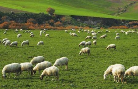 Lotti del demanio agli allevatori abruzzesi: il bando