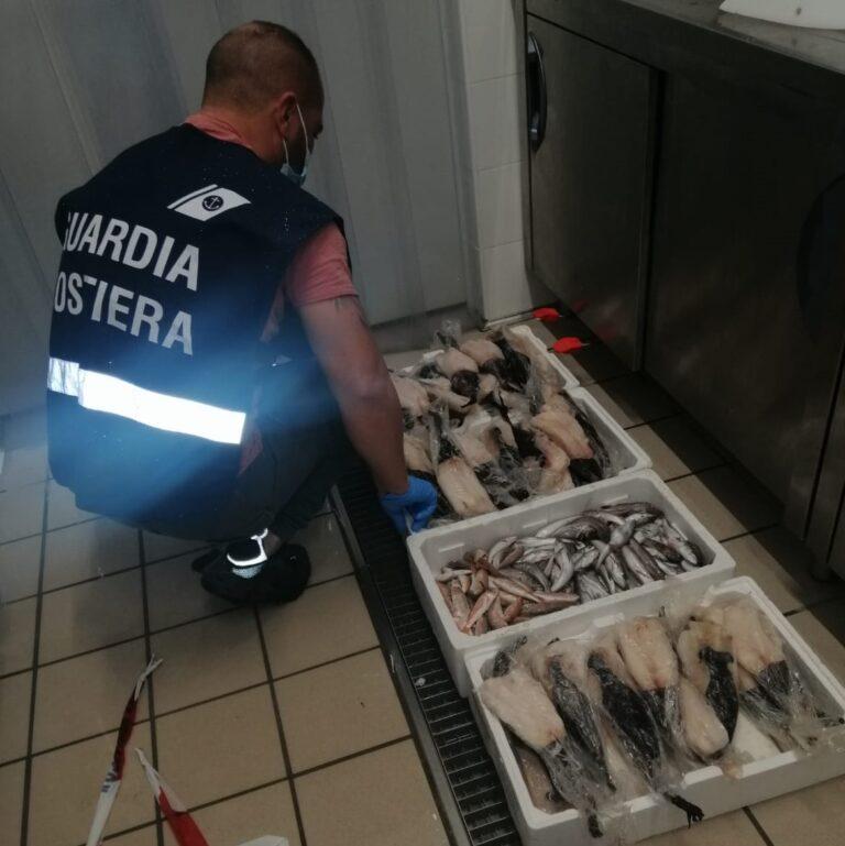 Giulianova, pesce sequestrato nelle pescherie (Tortoreto) e ai diportisti