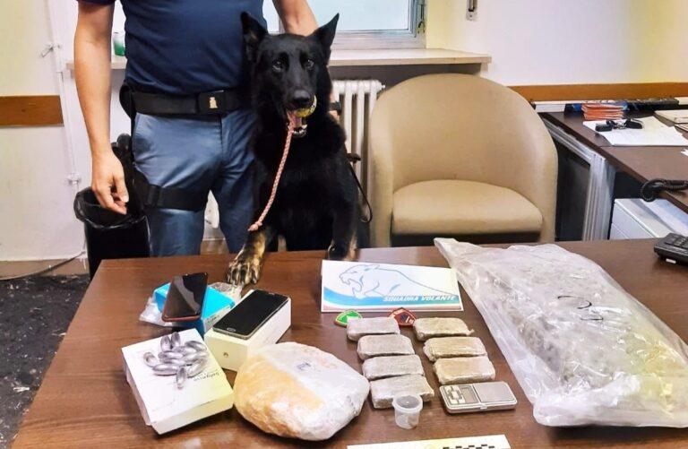 Pescara, il cane Ayrton trova 2 chili di droga