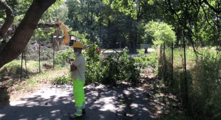 Pescara, via Pantini: interrogazione parlamentare sugli alberi tagliati