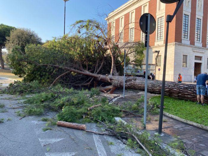 """Pescara: """"Sotto controllo 25mila alberi"""""""