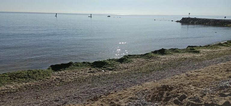 Roseto, accordo tra Comune e coop Lido delle Rose per eliminare le alghe spiaggiate NOSTRO SERVIZIO