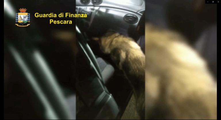 Città Sant'Angelo, mezzo chilo di cocaina sotto il cruscotto: scoperto dal cane della Finanza-VIDEO