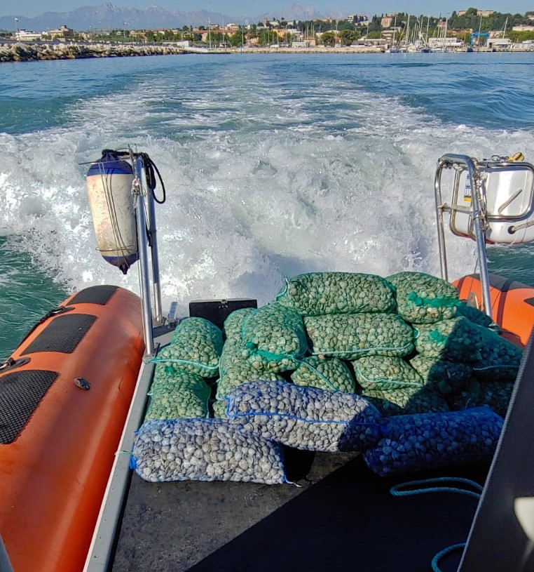 Giulianova, pesca irregolare: multe e sequestri di vongole FOTO
