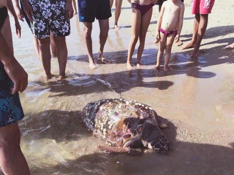 Tartaruga morta sulla spiaggia di Tortoreto FOTO