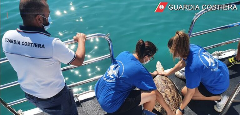 Giulianova, due tartaruge, dopo le cure, ritrovano il mare FOTO